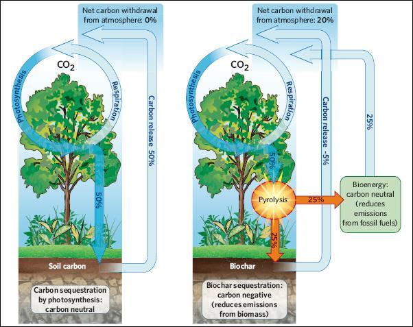 Глобальный круговорот углерода и климат