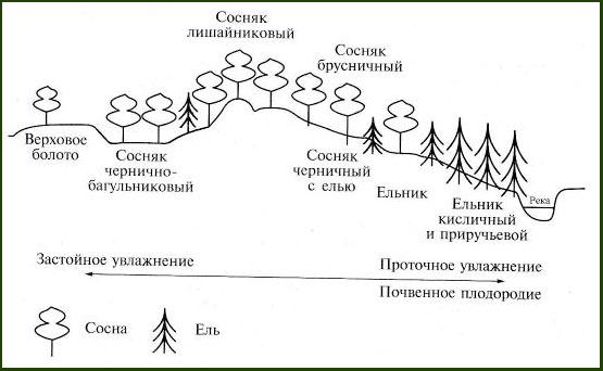 Образование среды жизни. Закон РФ об охране окружающей среды