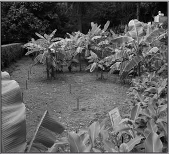 Экологическая оценка современного состояния Гурзуфского парка-памятника садово-паркового искусства