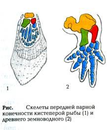 Иллюстрационный материал на уроках биологии
