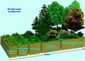 Екологічне значення сукцесій