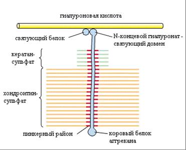 Нарушение экспрессии D-глюкуронил С5-эпимеразы как возможная причина изменения структуры протеогликанов в опухоли молочной железы человека