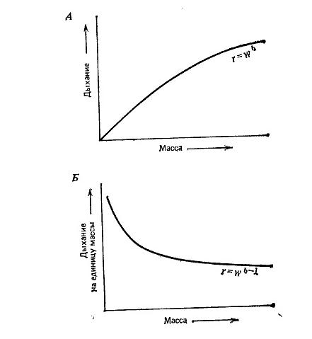 Энергия в экологических системах. Принципы и концепции. Метрология и размер особей