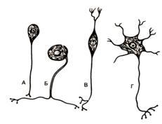 Цитология, эмбриология, общая гистология
