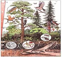 Сообщество, экосистема, биогеоценоз