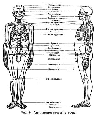 Методы изучения морфофункциональных особенностей организма спортсмена
