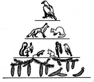 Біогеоценологія – вчення про екосистеми