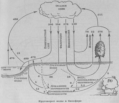Структура и отношения внутри экосистемы