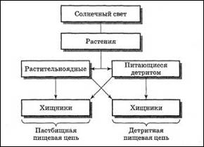 Структура экосистем