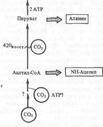 Экологические аспекты современной биотехнологии